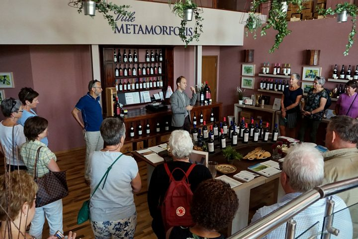 Best Winery visit by Delish Experiences