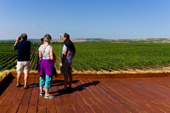 Best Dealu Mare Wine tour by Delish Experiences by Delish Experiences